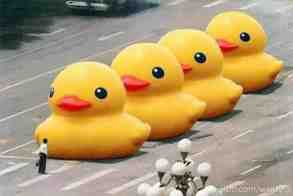 big yellow ducks