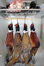 hanging pheasants